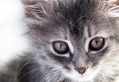 Cat gray — Stock Photo