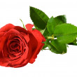 Red rose — Stock Photo #5541163