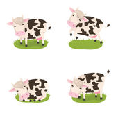 Cute cows — Stock Photo