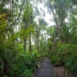 Trail tropical rainforest — Stock Photo