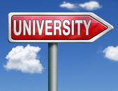 University road sign arrow — Stock Photo