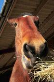 Horses Head — Stock Photo