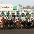 Gate Break for the 2012 Bayakoa Stakes - Stock Photo