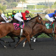 """Lady of Fifty"" Wins The Bayakoa Stakes — Stock Photo"