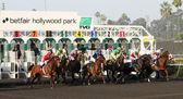 Gate Break for the 2012 Bayakoa Stakes — Stock Photo