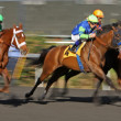Include The Cat Wins an Allowance Race - Stok fotoğraf
