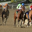 Book Review Wins 2012 The La Brea Stakes - Foto de Stock