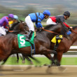 Tiz The Truth Wins His First Race — ストック写真