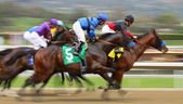 Tiz The Truth Wins His First Race — Foto Stock
