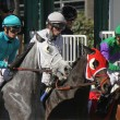 Stock Photo: Gate Break for Turf Race