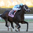 Verrazano Wins The Wood Memorial - Stok fotoğraf