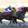 Swagger Jack Wins The Carter Handicap — Lizenzfreies Foto