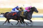 Swagger Jack Wins The Carter Handicap — Stock Photo