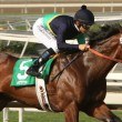 "Stock Photo: Jockey Mike Smith and ""Cherubim"" in SVincente Stakes"