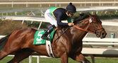 "Jockey Mike Smith and ""Cherubim"" in San Vincente Stakes — Stock Photo"