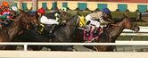 Winning on the Turf Course — Stock Photo