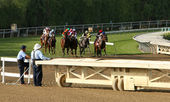 Thoroughbreds Storm Down The Hillside Turf Course — Stock Photo
