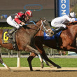 Stock Photo: Winning an Allowance Race