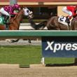 Stock Photo: Winning on Turf Course