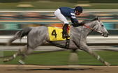 Motion Blur Racing Horse — Stock Photo