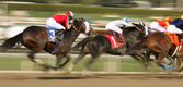 Winning The San Carlos Stakes — Foto Stock