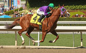 California Chrome Wins The San Felipe Stakes — Stock Photo