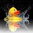 Quitschente-Duck-Splash — Stock Photo