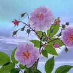 kwiaty — Zdjęcie stockowe #42621673