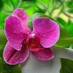 kwiaty — Zdjęcie stockowe #42622195