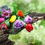 kwiaty — Zdjęcie stockowe #42622513