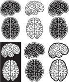 Brain set — Stock Vector