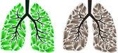 Iki akciğer — Stok Vektör