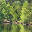Reflection of trees in the pond — Stock Photo