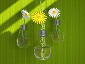 красивые цветы в вазы в форме лампочки. — Стоковое фото