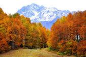 Red autumn in Western Caucasus — Stock Photo