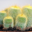 Some cactuses — Stockfoto