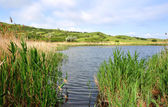 Lake, reeds and hills with the cloudy sky — ストック写真