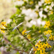 Beautiful yellow florets on the nature — Stock Photo