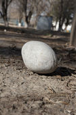 A large round stone on the ground — Stock Photo