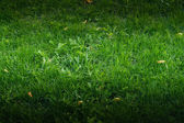 Green grass — Photo