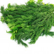 Dill and parsley isolated on a white background - Stock Photo