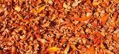 Hojas gruesa alfombra amarilla de otoño — Foto de Stock