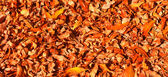 Thick yellow rug of autumn leaves — Stock Photo