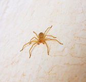 Yellow spider — Stockfoto
