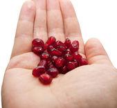 Czerwony granat w ręku — Zdjęcie stockowe