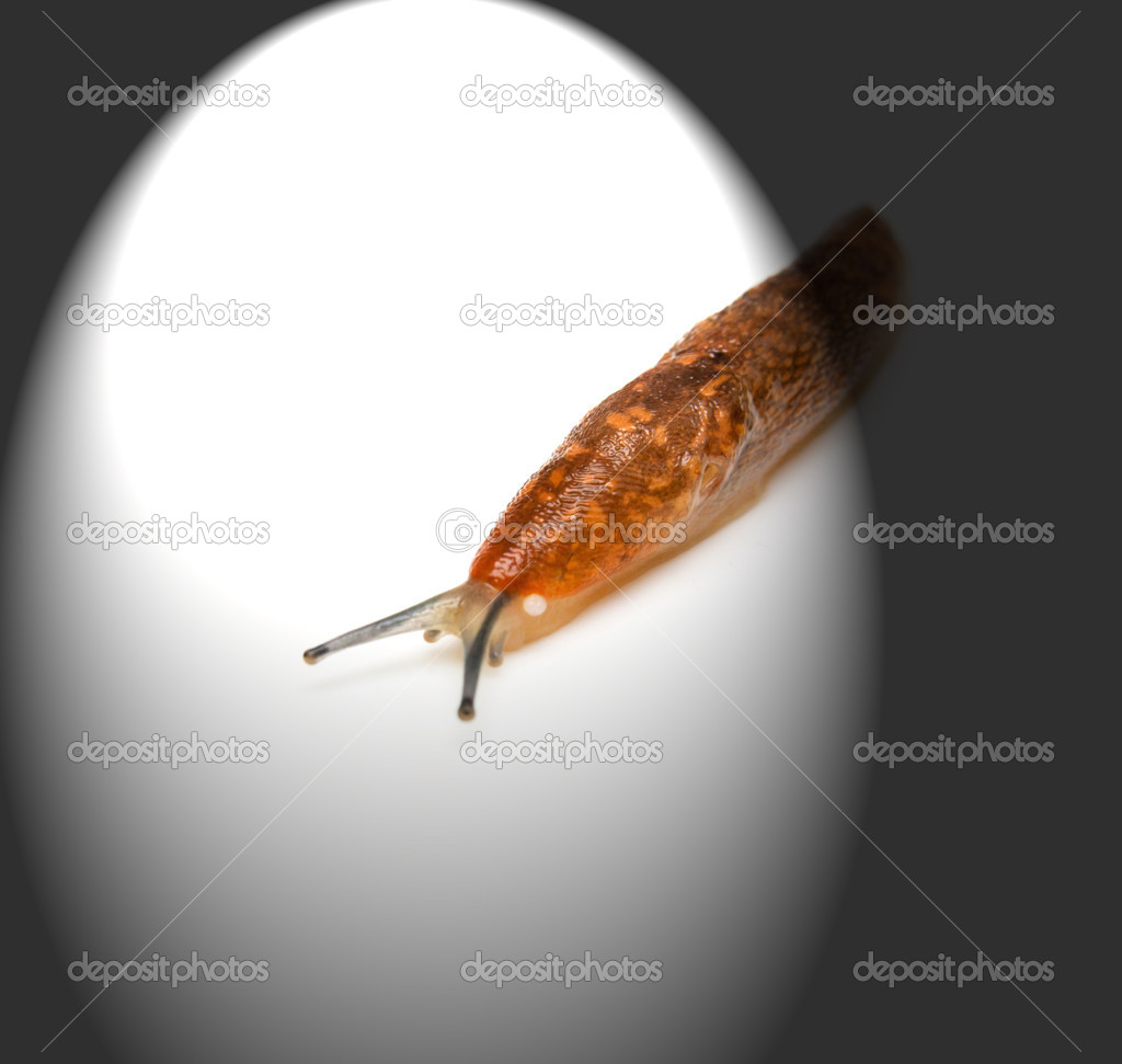 Slug - the slowest animal.    Stock Photo #14660865