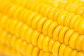 Corn as background. macro — Stockfoto