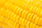 Maïs comme toile de fond. macro — Photo