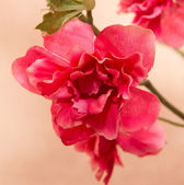 Red artificial flowers — Foto de Stock
