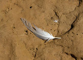 Feather of a bird lying on the ground — Stock Photo